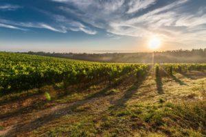 Malibu Wines Vineyard