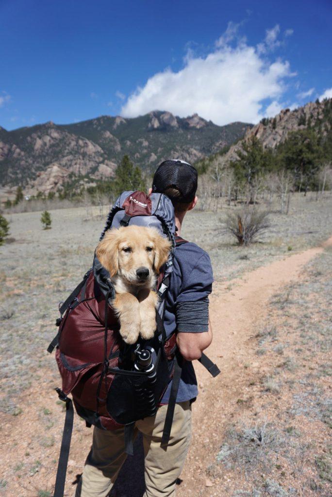 Dog in backpack on hike