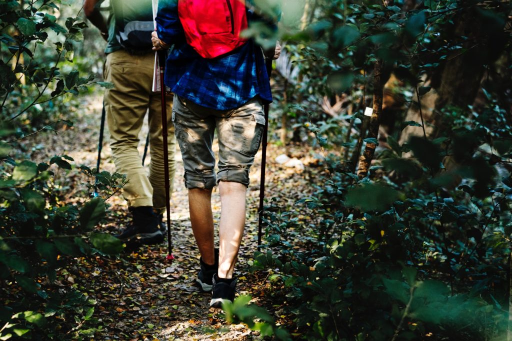 hiking trail woods