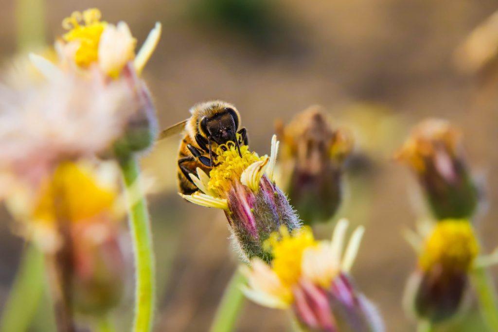 bees plants
