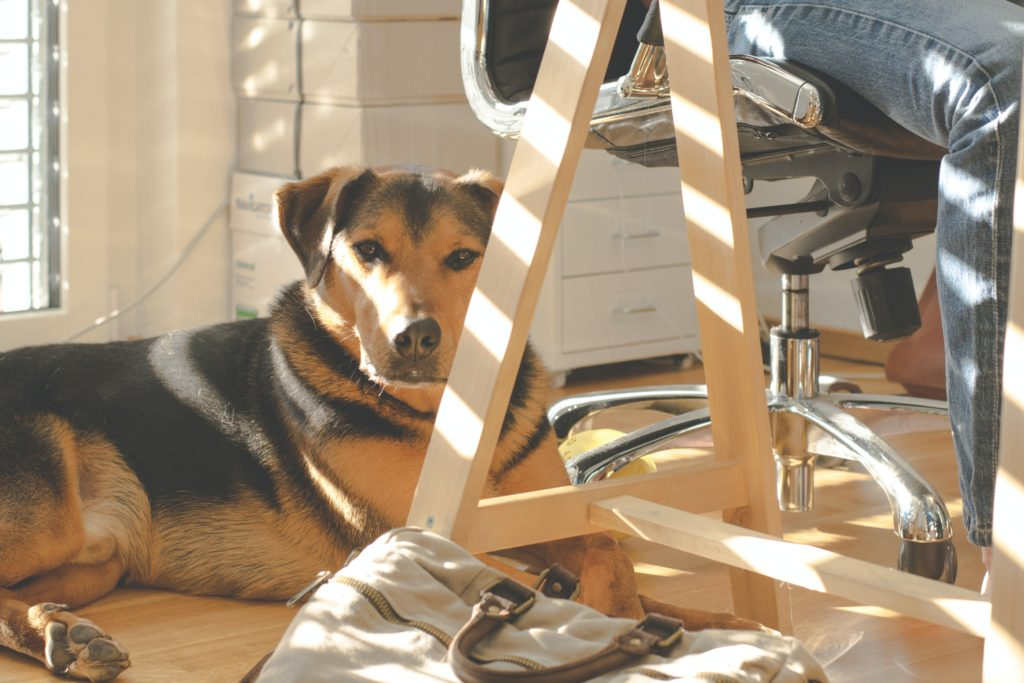 dog on floor of home office
